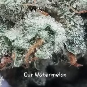 Our Watermelon