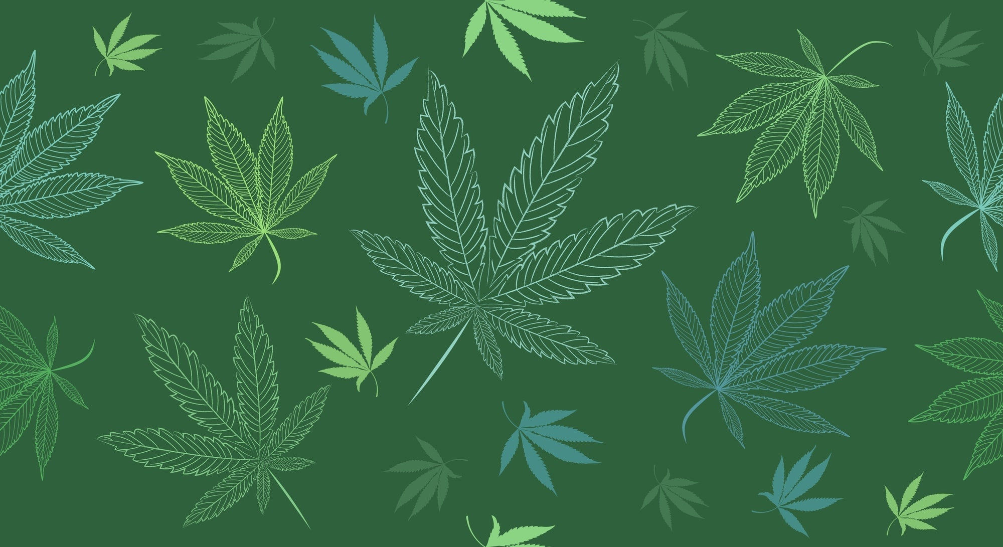 cannabis leaves background